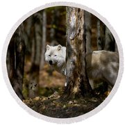 Round Beach Towel featuring the photograph Arctic Wolf In Forest by Wolves Only