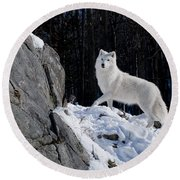 Round Beach Towel featuring the photograph Arctic Wolf On Rock Cliff by Wolves Only