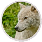 Arctic Wolf Pictures 241 Round Beach Towel