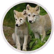 Arctic Wolf Puppies Round Beach Towel