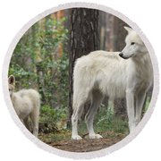 Arctic Wolf With Pup, Canis Lupus Albus Round Beach Towel