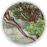 Round Beach Towel featuring the photograph Arctostaphylos Hybrid by Kate Brown