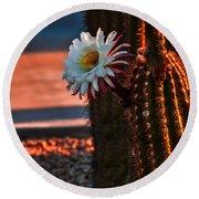 Argentine Cactus Round Beach Towel