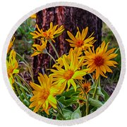 Arrowleaf Balsamroot Round Beach Towel