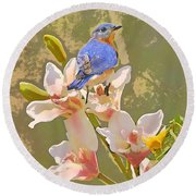 Bluebird On Orchids Artistic Photo Round Beach Towel