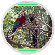 Round Beach Towel featuring the photograph Artistic Wild Hawaiian Parrot by Joseph Baril