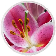 Asian Lily Round Beach Towel by Michael Porchik