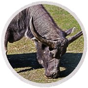 Asian Water Buffalo  Round Beach Towel