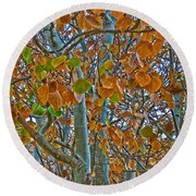 Round Beach Towel featuring the photograph Aspen Leaves In The Fall by Mae Wertz