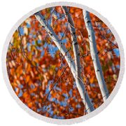 Round Beach Towel featuring the photograph Aspen by Sebastian Musial