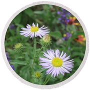 Asters In Close-up Round Beach Towel