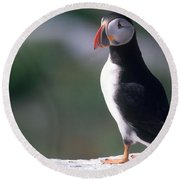 Atlantic Puffin Round Beach Towel by Art Wolfe
