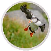 Atlantic Puffin, Incoming.... Round Beach Towel