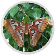 Round Beach Towel featuring the photograph Atlas Moth #2 by Judy Whitton