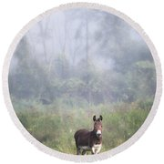 Round Beach Towel featuring the photograph August Morning - Donkey In The Field. by Gary Heller