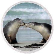Australian Sea Lion Neophoca Cinerea Round Beach Towel