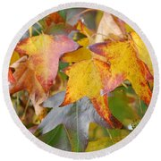 Autumn Acer Leaves Round Beach Towel
