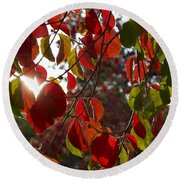 Autumn Dogwood In Evening Light Round Beach Towel by Michele Myers