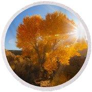 Autumn Golden Birch Tree In The Sun Fine Art Photograph Print Round Beach Towel by Jerry Cowart