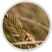 Autumn Grasses Round Beach Towel
