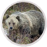 Round Beach Towel featuring the photograph Autumn Grizzly by Jack Bell