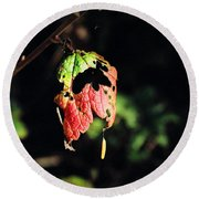 Round Beach Towel featuring the photograph Autumn Leaf by Cathy Mahnke
