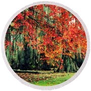 Round Beach Towel featuring the photograph Autumn Maple  by Kelly Nowak