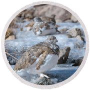Autumn Plumage White-tailed Ptarmigan Round Beach Towel