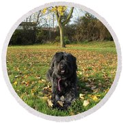 Round Beach Towel featuring the photograph Autumn Portrait by Vicki Spindler