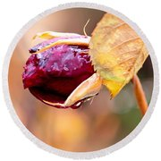 Round Beach Towel featuring the photograph Autumn Rosebud by Rona Black