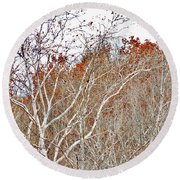 Autumn Sycamores Round Beach Towel
