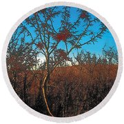 Autumn Round Beach Towel by Terry Reynoldson