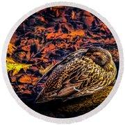Autumns Sleepy Duck Round Beach Towel
