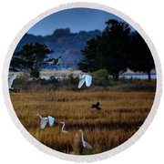 Aviary Convention Round Beach Towel by Robert McCubbin