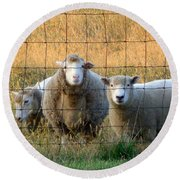 Round Beach Towel featuring the photograph Baaaaa by Joseph Skompski