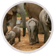 Baby African Elephants Round Beach Towel