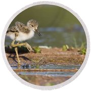 Baby Black-necked Stilt Exploring Round Beach Towel