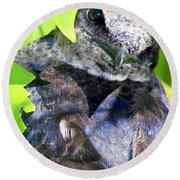 Baby Bluejay Peek Round Beach Towel by Karen Wiles