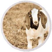 Baby Boer Goat Round Beach Towel