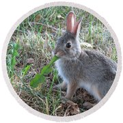 Baby Bunny Eating Dandelion #01 Round Beach Towel by Ausra Huntington nee Paulauskaite