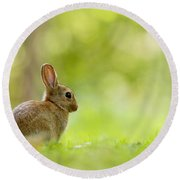 Baby Bunny In The Forest Round Beach Towel