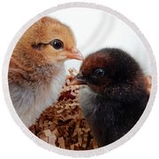 Baby Chicks Round Beach Towel