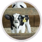 Baby Cow Round Beach Towel