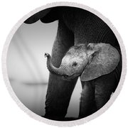 Baby Elephant Next To Cow  Round Beach Towel