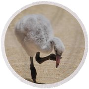 Baby Flamingo Round Beach Towel by DejaVu Designs