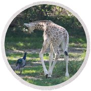 Baby Giraffe And Peacock Out For A Walk Round Beach Towel by John Telfer