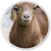 Baby Goat Round Beach Towel by Shelby  Young