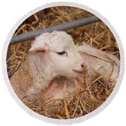 Baby Lamb Round Beach Towel