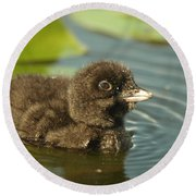 Round Beach Towel featuring the photograph Baby Loon by James Peterson