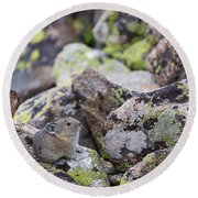 Round Beach Towel featuring the photograph Baby Pika by Michael Chatt